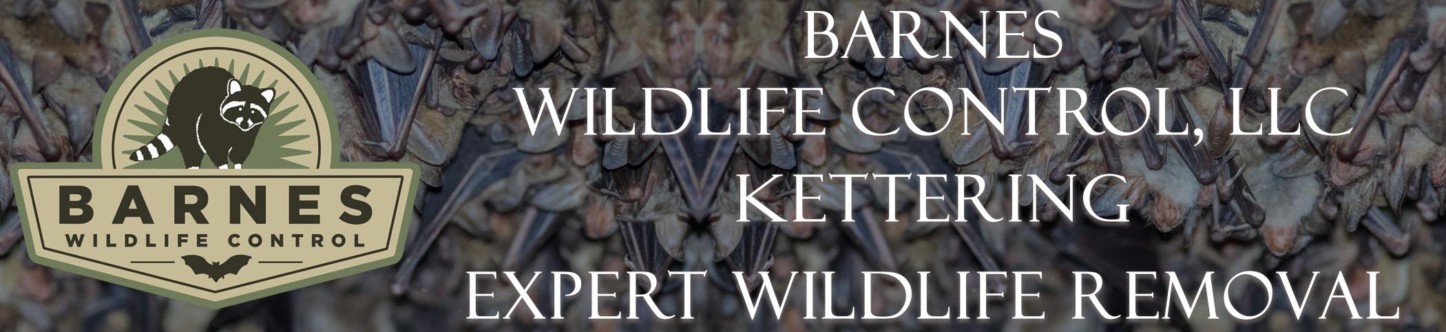 barnes_wildlife_Kettering_ohio_headers