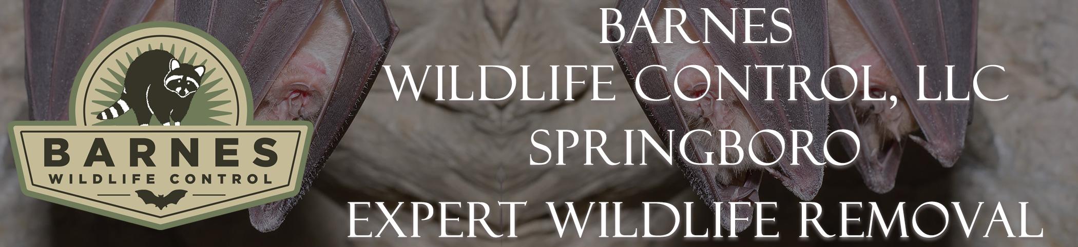 barnes_wildlife_springboro_ohio_headers
