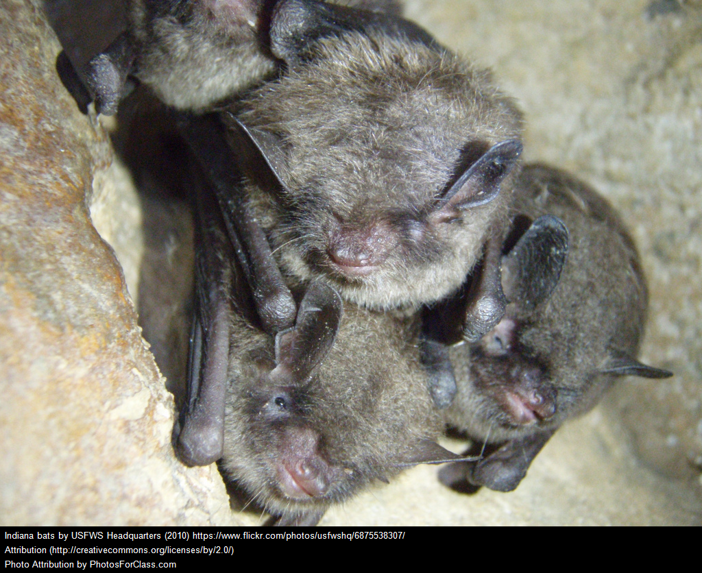 A group of young bats clustered together