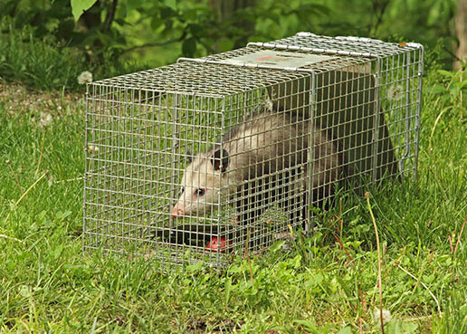 You want Professional Wildlife Removal Services dealing with your wildlife issues. You've come to the right place at Bat Removal Pro!