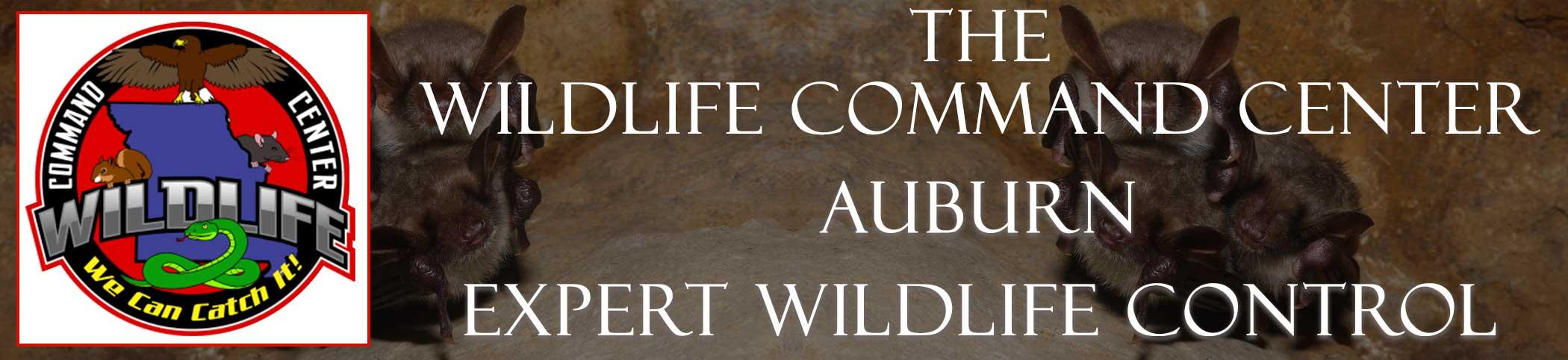 auburn-wildlife-command-center