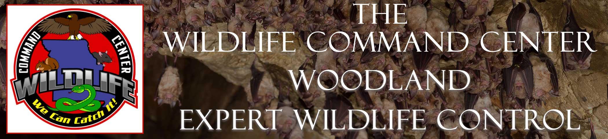 woodland-wildlife-command-center
