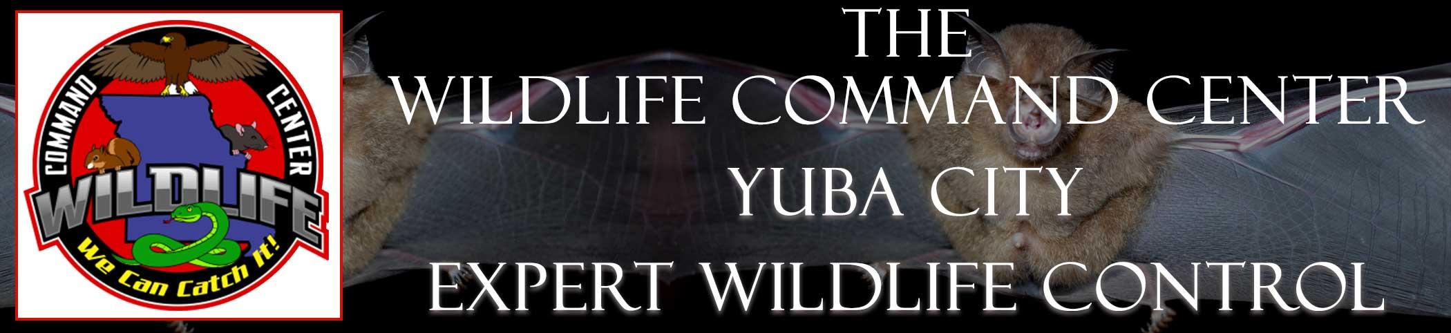 yuba-city-wildlife-command-center