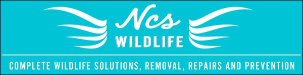 Ncs Wildlife Bat Removal Bridgeport Ct Division