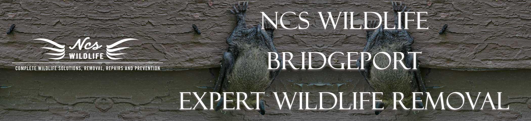ncs-wildlife-bridgeport