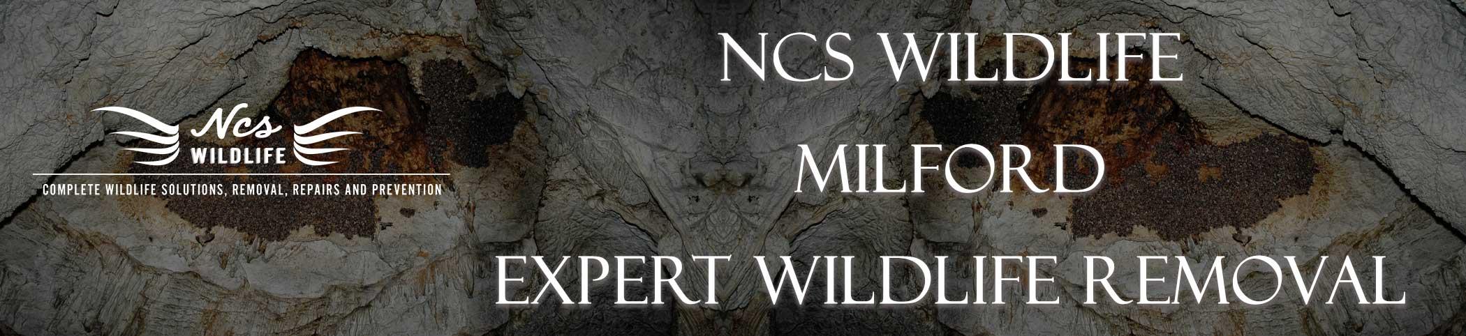 ncs-wildlife-milford