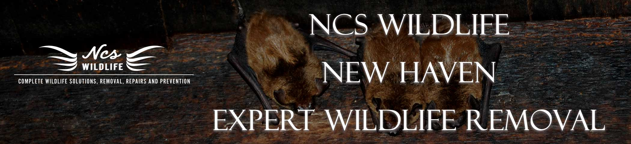 ncs-wildlife-new-haven