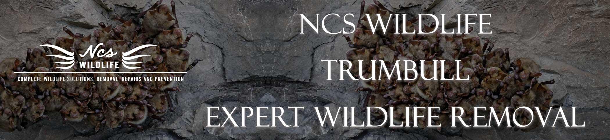 ncs-wildlife-trumbull