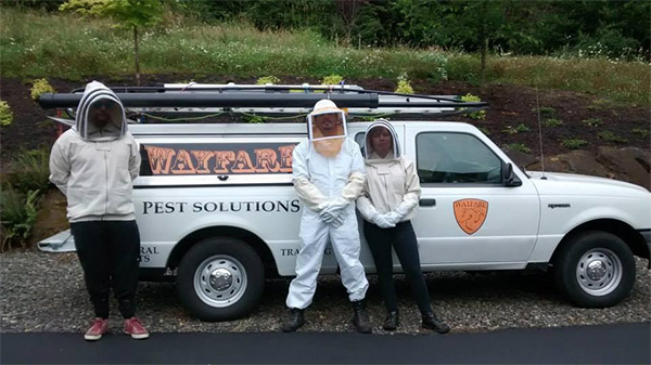 Wayfare Pest Solutions - A leader in Pest Removal and Control and Vancouver Bat Removal. We're here to serve your needs 24/7/365. Call us now!