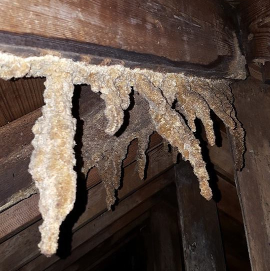 "These are Stalactites in a ""Home"" caused by minerals in Bat urine."