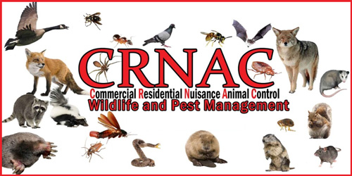 CRNAC Wildlife And Pest Management At Goshen Indiana Bat Removal