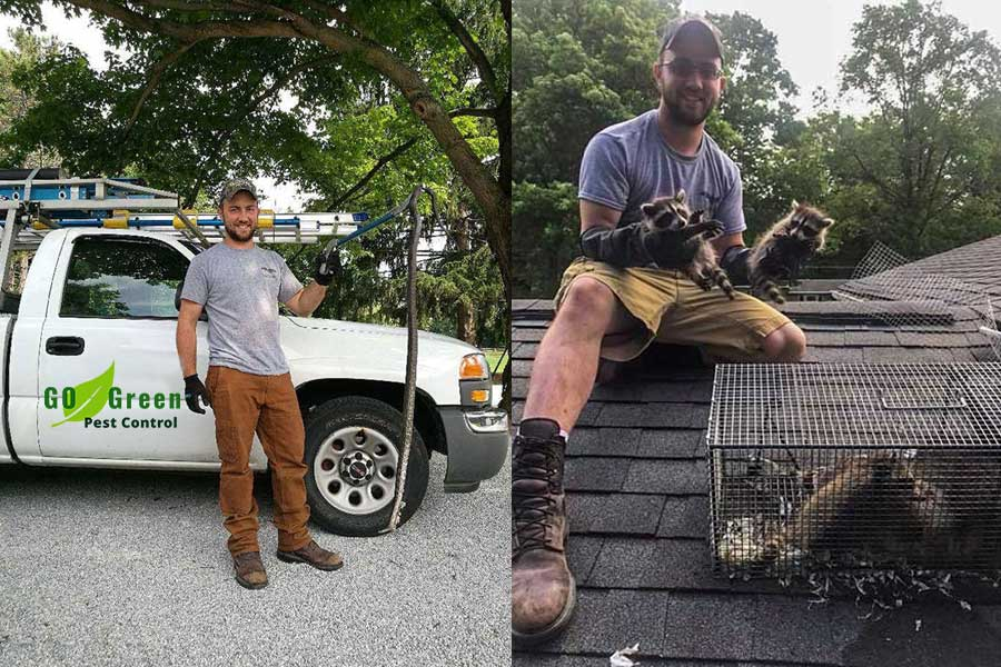 Strongsville Animal trapping and Wildlife Removal